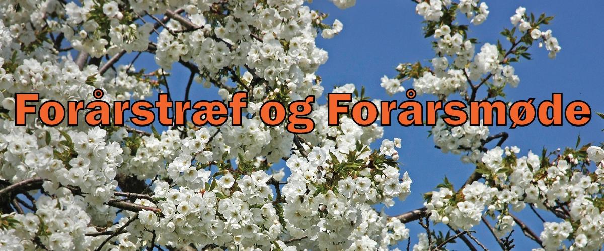 foraar_orange_01
