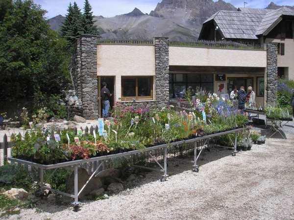 Gartneri med bjerg planter ved Col du Lautaret